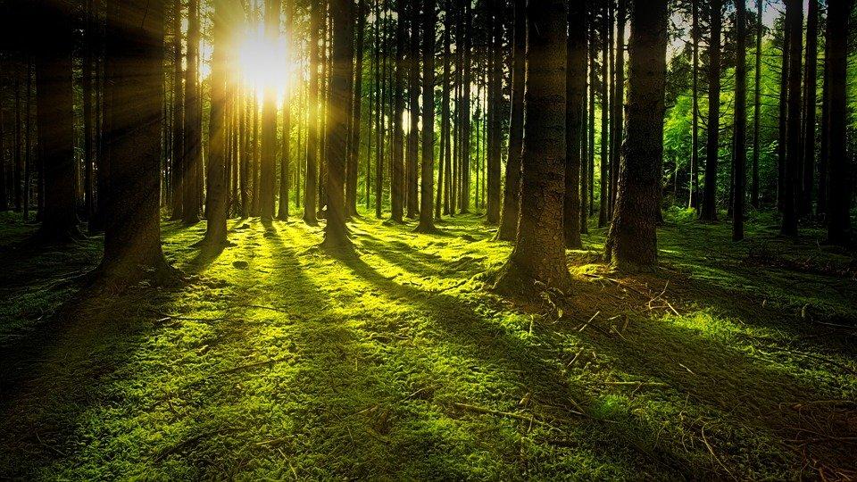 východ  nebo západ slunce v lese